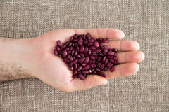 Man displaying small deep red kidney beans Royalty Free Stock Photography