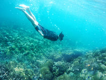 Man dives in a tropical sea. Man dives in a tropical underwater sea Stock Photography