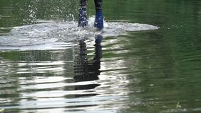 A man is diving in the river stock video footage