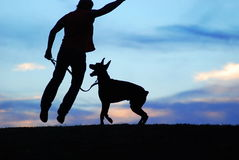 Man and dog. Playing with a dog on a meadow royalty free stock photos
