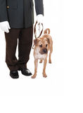 Man with dog. Royalty Free Stock Image