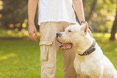 Man and Dog Stock Photos