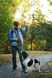 Man and dog in autumn park. Young man with dog walks in autumn park. He commands sit pet. Dog is hunting, short-footed, lop-eared and spotty stock image