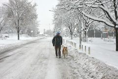 Man and dog in blizzard. Akita Inu and its owner walking in the blizzard Stock Photo