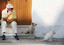Man, dog and cat Stock Photos