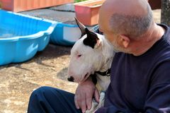 Man with dog. English Bull Terrier white dog in company with his owner sitting and enjoying in the garden outdoor and petting dog. stock photo