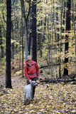 Man and Dog on Fall Hike in Forest Stock Photography