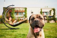 Man with dog on the garden Stock Photos
