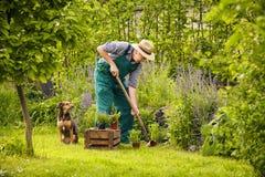 Man dog gardening. Man with dog working in the garden Stock Photos