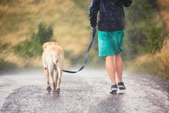 Man with dog in heavy rain. Young man running with his dog labrador retriever in heavy rain on the rural road stock photos