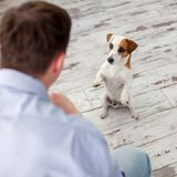 Man with dog at home stock photography