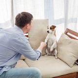 Man with dog at home royalty free stock photos