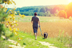 A man with a dog on a leash runs along the road. Along the oat field in summer Royalty Free Stock Images