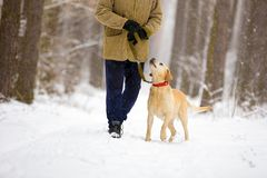 Man with dog walks in snowy forest. Man with dog on a leash walks in snowy forest in winter stock photography