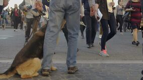 Man and dog without muzzle walking in crowd of people in city, risk of dog bites
