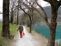 Man with the dog near the mountain lake with turquoise blue water and old tree. Mountain lake with turquoise blue water,man walking his dog whippet. Full peace stock photography