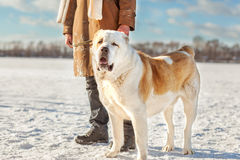 Man and dog outdoors Stock Image