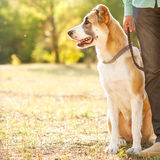 Man and dog outdoors Royalty Free Stock Photography