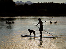 Man, Dog on Paddle Board, Oregon. The silhouette of a man and his dog on a surf board (paddle board), paddling along the Deschutes River at sunset, in Bend Royalty Free Stock Image