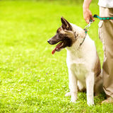Man and Dog in the park. Royalty Free Stock Image