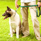 Man and Dog in the park. Royalty Free Stock Images