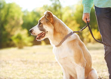 Man and dog in park Royalty Free Stock Photography
