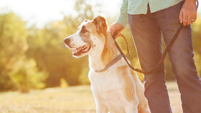 Man and dog in park Stock Image