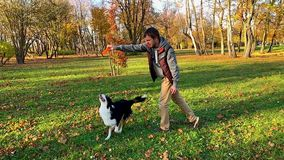 Man with dog in park. Slow motion - Man training a happy dog in the autumn park. Beautiful Australian shepherd puppy 10 months old - jumping, enjoy playing in a stock video footage