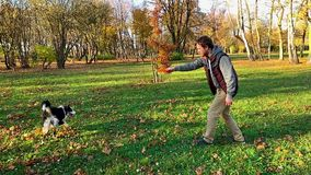 Man with dog in park. Slow motion - Man training a happy dog in the autumn park. Beautiful Australian shepherd puppy 10 months old - jumping, enjoy playing in a stock video