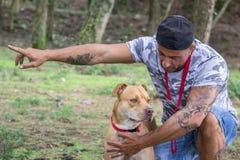 Man dog train pit bull stock images