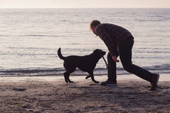 Man and dog play with stick. Young caucasian male walking with dog on the morning beach, sunset on the sea or ocean and man with black labrador puppy Royalty Free Stock Image