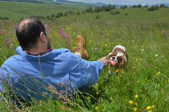 Man and Dog Playing on Meadow Stock Photo