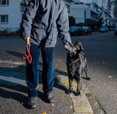 Man with dog posing at dusk in city. Man with spaniel dog on city street at dusk Royalty Free Stock Photography