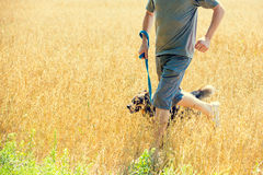 A man with a dog runs through the oat field Royalty Free Stock Images