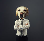 Man with dog's head over grey Royalty Free Stock Photography