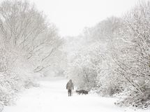 Man and dog in snow. Man walks his dog in snow covered woods in winter Stock Photo