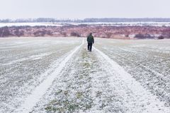 Man with dog on snowy road. On young wheat field on spring time stock images