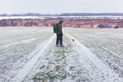 Man with dog on snowy road. On young wheat field on spring time royalty free stock images