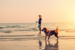 A man and a dog stand on the beach and sunset, sunrise stock photos
