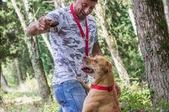 Man dog train pit bull royalty free stock photography