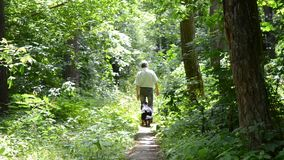 Man with a dog walking on a path in the woods. Man with a two dog walking on a path in the woods on a sunny summer day, HD 1080 stock footage