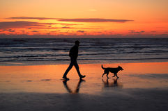 Man and dog walking at sunset. A man and a dog walking along the beach at sunset being silhouetted by the sunset Royalty Free Stock Photography