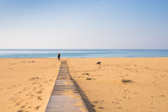 Man with dog walking on the wooden path on the beach and looking into the distance of the ocean Stock Photos
