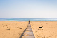 Man with dog walking on the wooden path on the beach and looking into the distance of the ocean Royalty Free Stock Image
