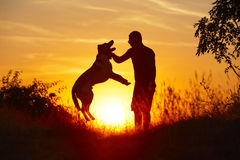 Man with dog Stock Images