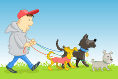 Man walking dogs. Man walking his three funny dogs stock illustration