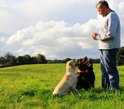 Man and dogs Royalty Free Stock Images