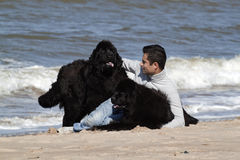 Man and is dogs in the beach Stock Photography