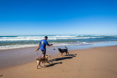 Man Dogs Playtime Beach Royalty Free Stock Image