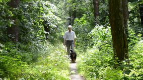 Man with dogs walking on footpath in the woods. Gray-haired man with a dog walking on the footpath in the woods on a sunny day stock video footage